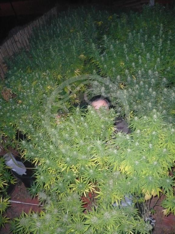 Comment camoufler des plantes de cannabis blog for Cannabis floraison exterieur
