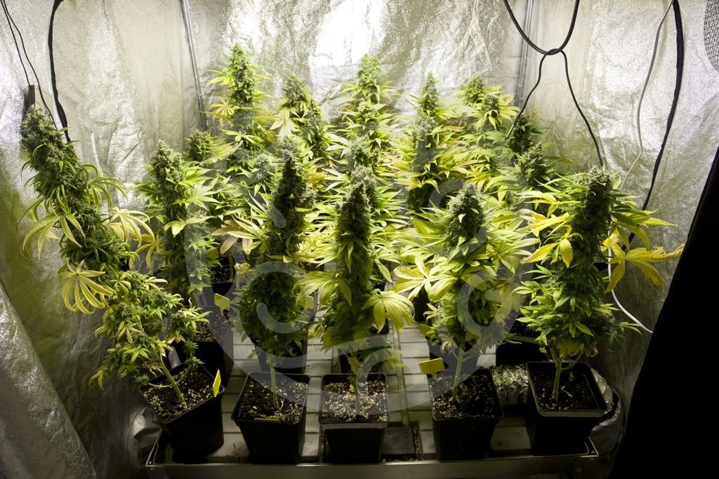 Comment ventiler une culture de cannabis blog philosopher seeds - Chambre de culture indoor ...