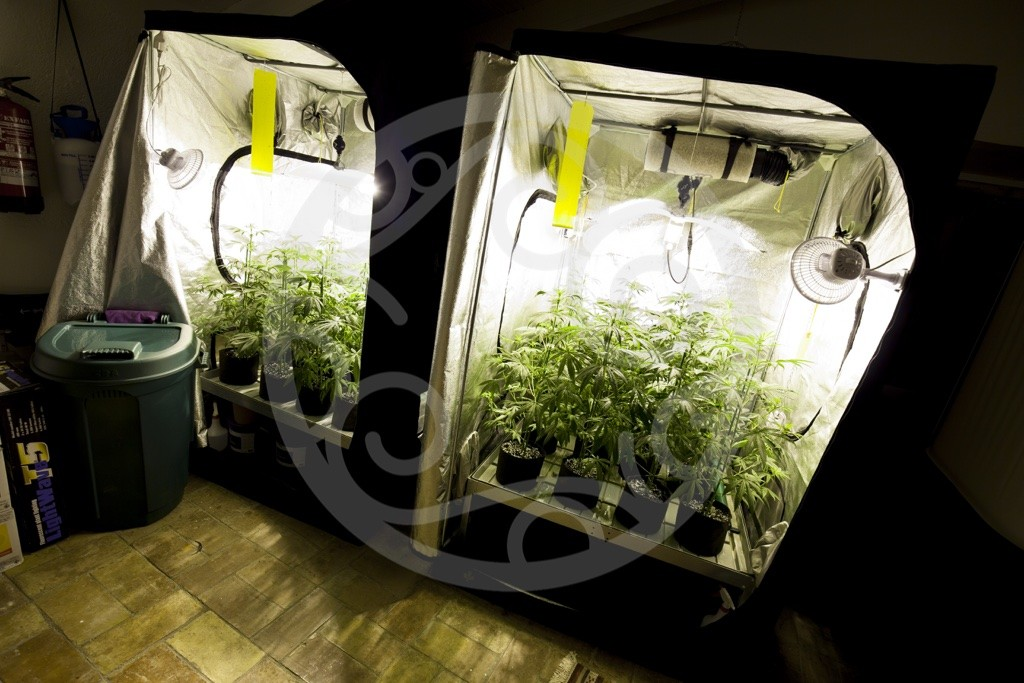 Cannabis grow room ventilation blog philosopher seeds for Chambre de culture de cannabis