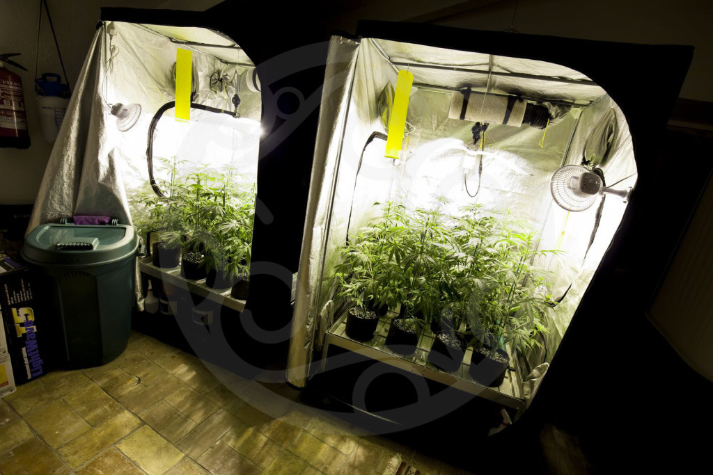 Bases essentielles pour culture de cannabis en interieur for Mini chambre de culture cannabis