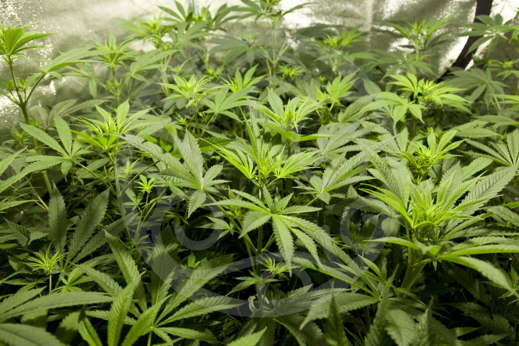 Gut gedüngte Pflanzen wachsen gesund und kräftig