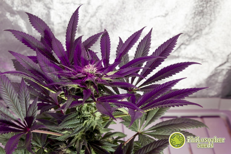 WEBOrange-Candy-Macro-Flor-43-12-12_0016