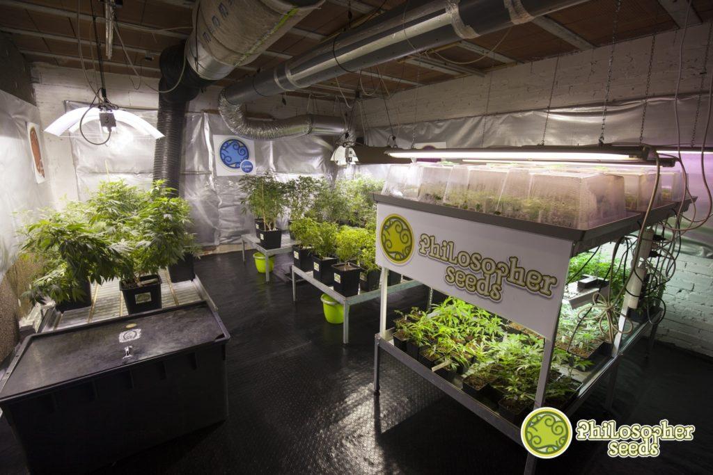 Lampade per la coltivazione della marijuana al chiuso