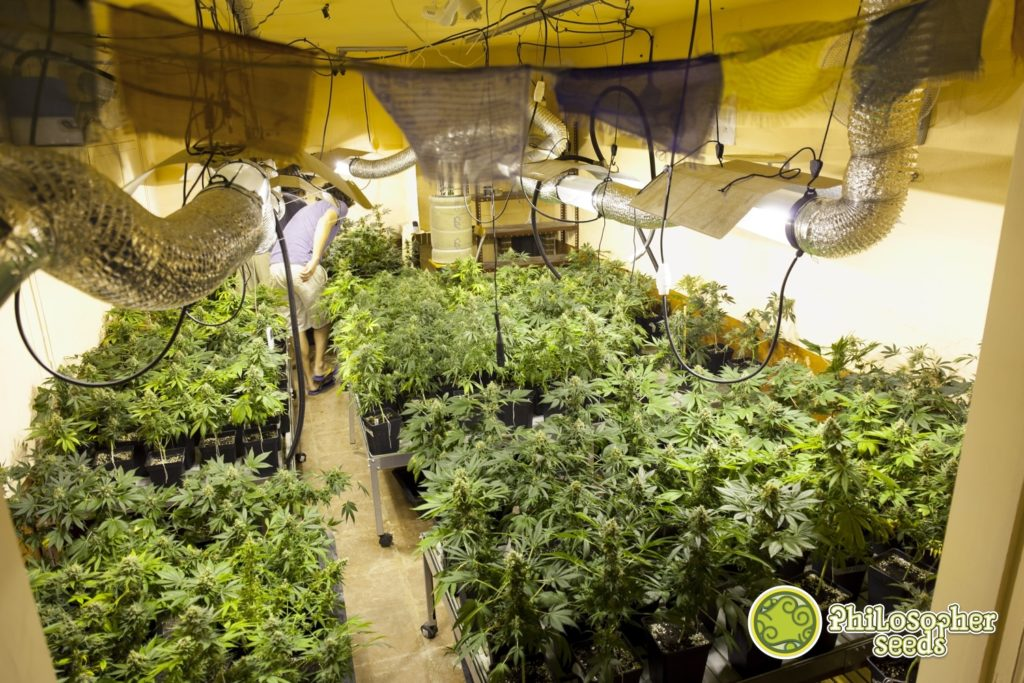 Lampade per coltivazione indoor u idea immagine home
