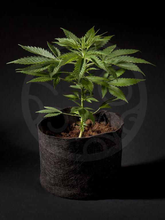Una planta bien alimentada crecerá sana y exuberante