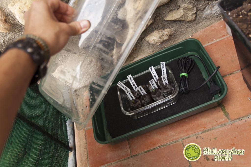 Un invernadero con calefacción es perfecto para germinar semillas