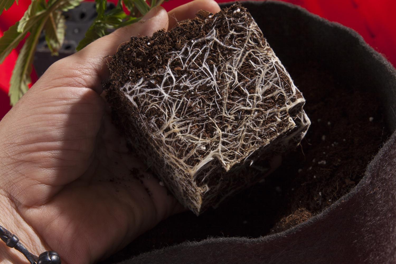 Das Mikroleben des Erdbodens beim Anbau von Marihuana