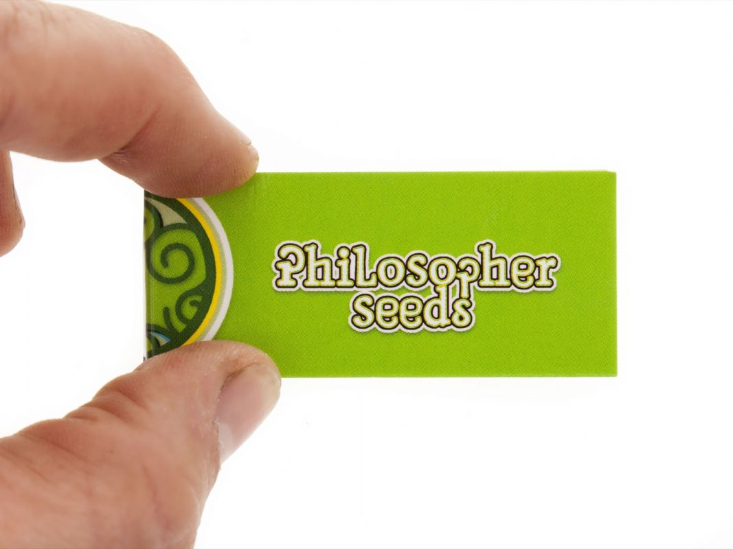 Carnet de cartons Philosopher Seeds