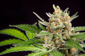 Otra foto de Wedding Cake Auto
