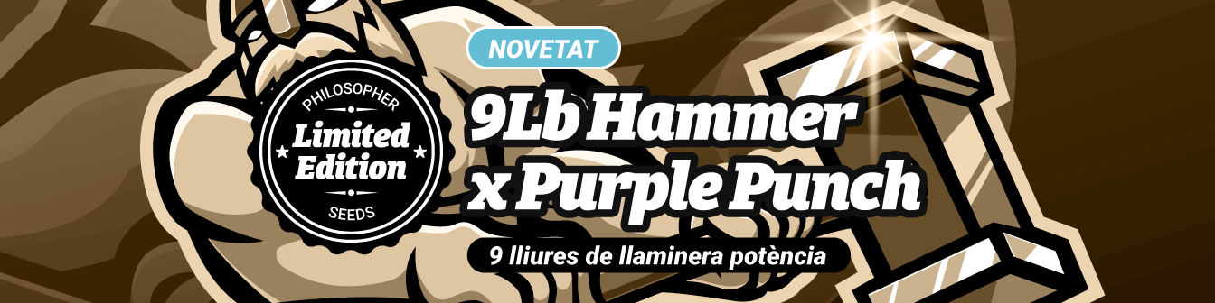 9Lb Hammer x Purple Punch