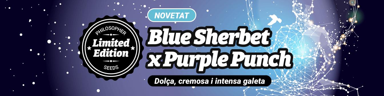Blue Sherbet x Purple Punch