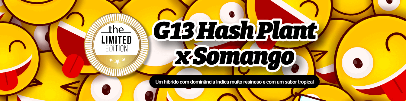 G13 Hash Plant x Somango