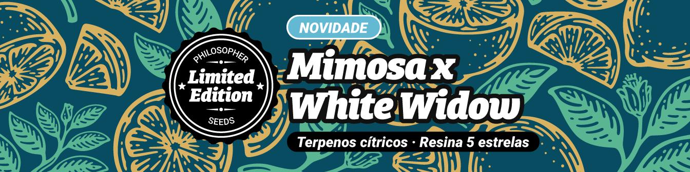 Prevenda Mimosa x White Widow